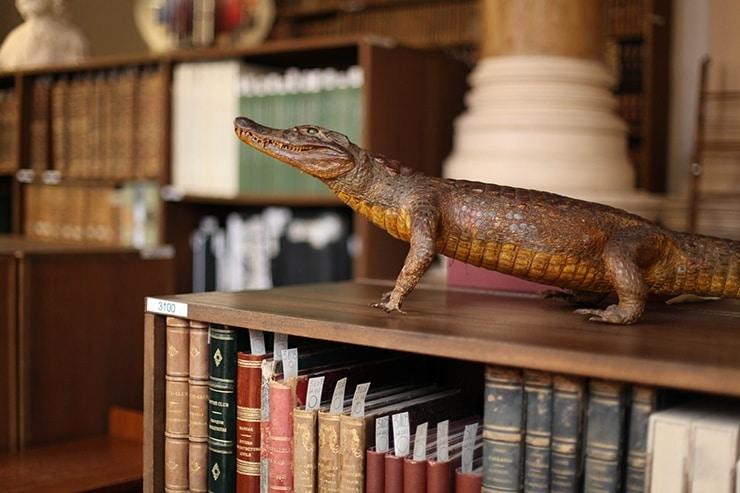 Bibliothèque, fonds ancien, isdaT