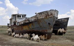 L'assèchement de la mer d'Aral, avec chameaux et bateaux.