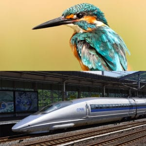Du martin-pêcheur au Shinkansen
